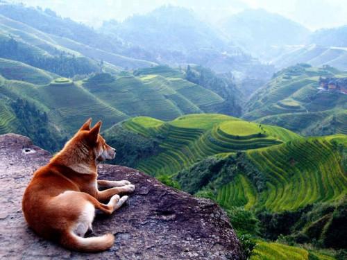 animal-beautiful-china-day-Favim.com-990778
