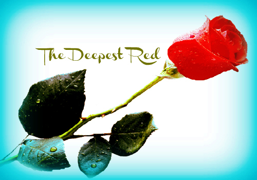 Love_Forever_Red_Rose
